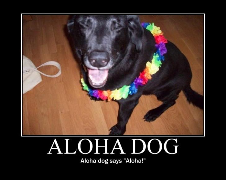 Aloha Dog 2